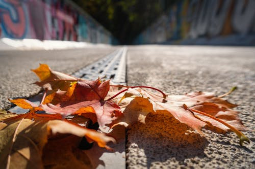 Free stock photo of autumn color, autumn leaves, drain
