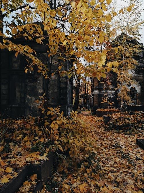Darmowe zdjęcie z galerii z cmentarz, jesień, kolor jesieni, opuszczony