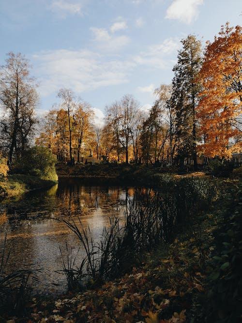 Darmowe zdjęcie z galerii z cmentarz, jesień, rosja