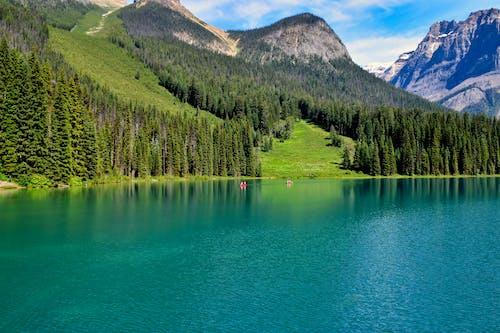 Foto profissional grátis de água, ao ar livre, árvore, beira do lago