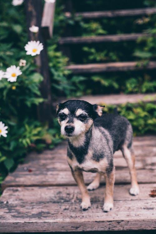 Kostenloses Stock Foto zu bezaubernd, haustier, hund, hündisch