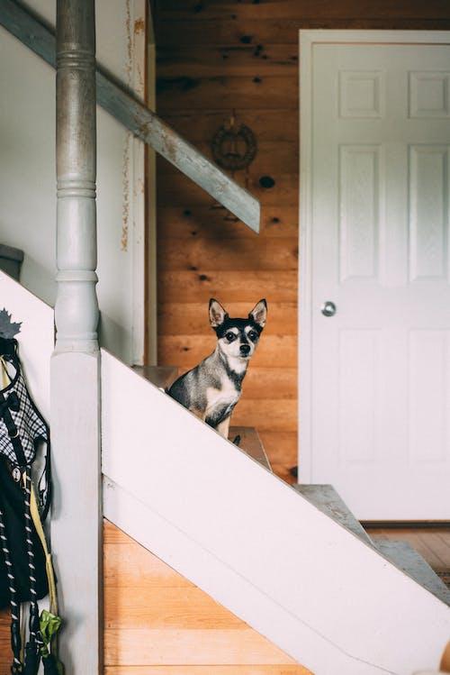 ペット, 動物, 哺乳類, 家畜の無料の写真素材