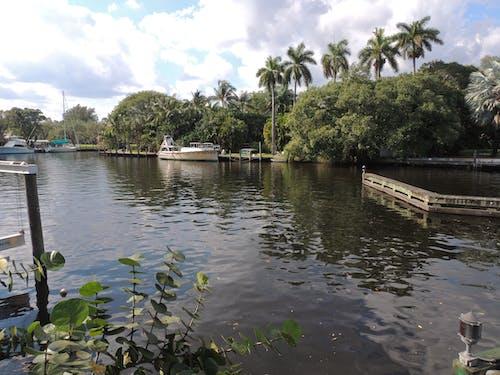 Ilmainen kuvapankkikuva tunnisteilla florida, järvimaisema, palmupuut, pilvet