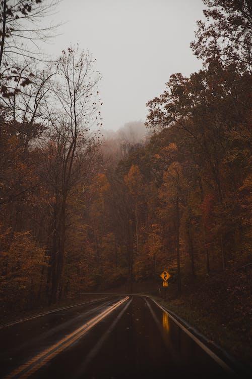 Wet Road In Between Trees