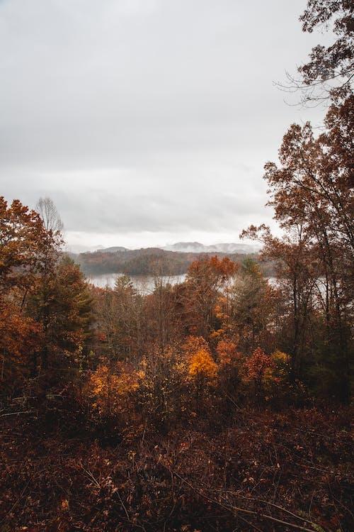 Ingyenes stockfotó erdő, esés, fák, ősz témában