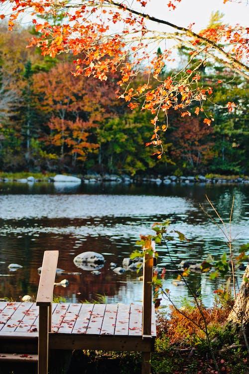 Foto d'estoc gratuïta de caure, colors de tardor, llac