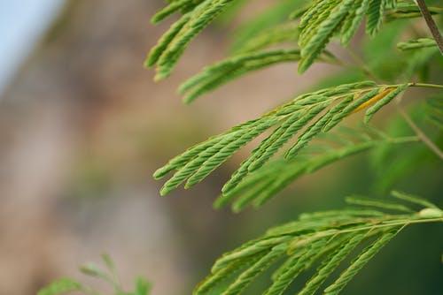 Бесплатное стоковое фото с ветвь, выращивать, глубина резкости, дерево