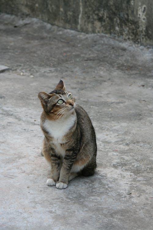 Ilmainen kuvapankkikuva tunnisteilla eksynyt, eläin, kissa, koditon