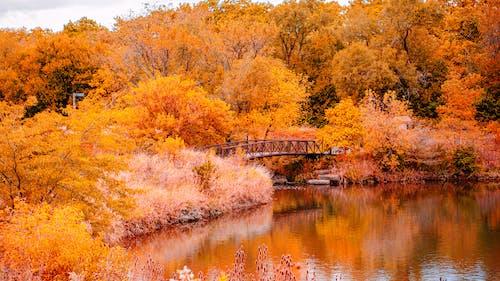 Darmowe zdjęcie z galerii z drzewa, jesień, most, pora roku