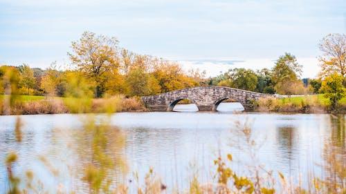 Darmowe zdjęcie z galerii z drzewa, jezioro, kolory jesieni, krajobraz