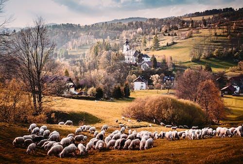 Fotobanka sbezplatnými fotkami na tému dedinský, farma, hospodárske zviera, hracie pole