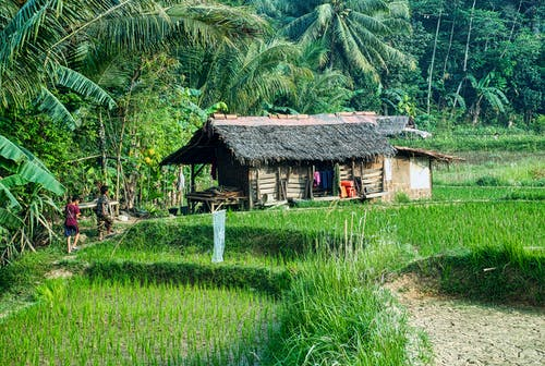 Two People Walking Towards A Nipa Hut In The Rice Fields Surrounded By Thick Vegetation