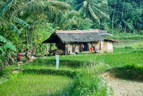 Foto profissional grátis de agricultura, água, ao ar livre, arroz