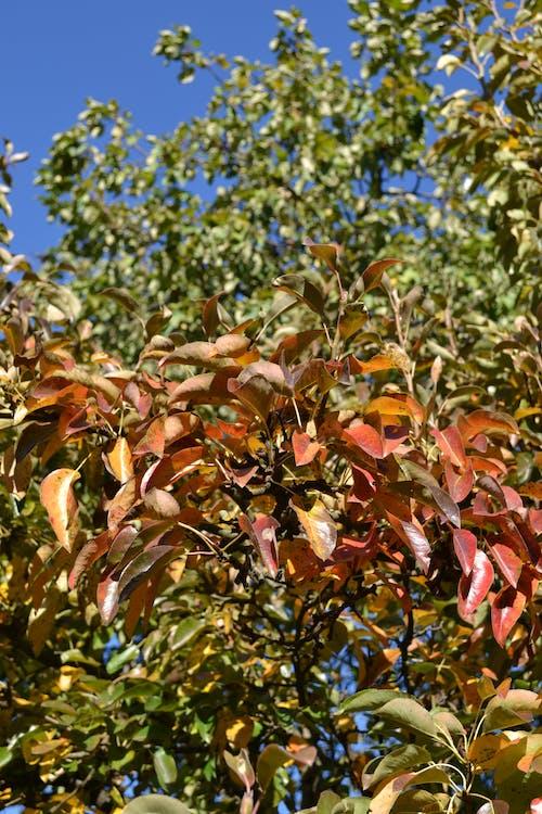Free stock photo of autumn, autumn color, colors of autumn, leaf