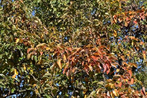 Free stock photo of autumn, green, image, leaf