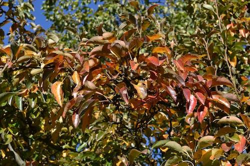 Free stock photo of autumn, autumn color, autumn leaves, color