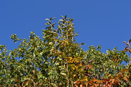 Free stock photo of autumn, leaf, sky