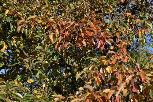 Free stock photo of autumn, autumn color, color, leaves