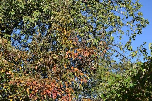 Free stock photo of autumn, autumn color, autumnal, leaf