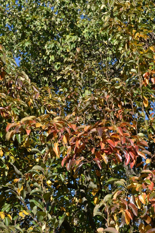 Free stock photo of autumn, autumn beautiful, autumn nature, leaves