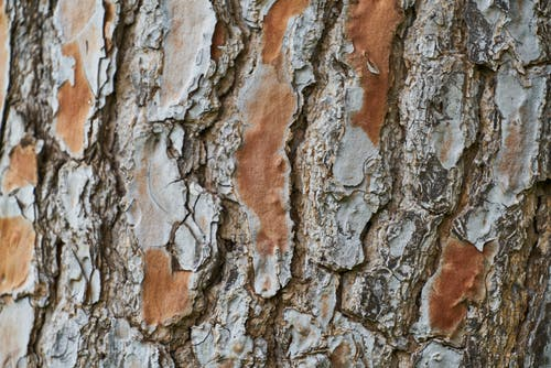 Close-Up View Of A Tree Bark
