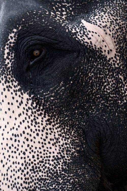 Black and White Skin Of An Animal