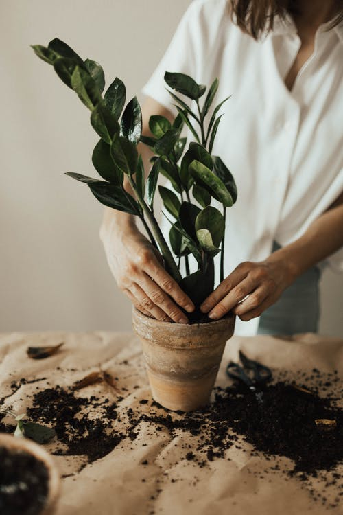 Foto d'estoc gratuïta de creixement, creixent, cuidador, fulles