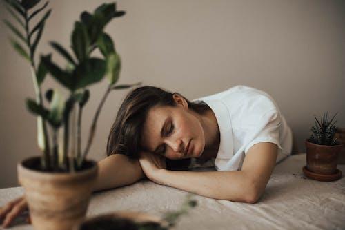 Ingyenes stockfotó álló kép, beltéri növény, cserepes növény, egyedül témában