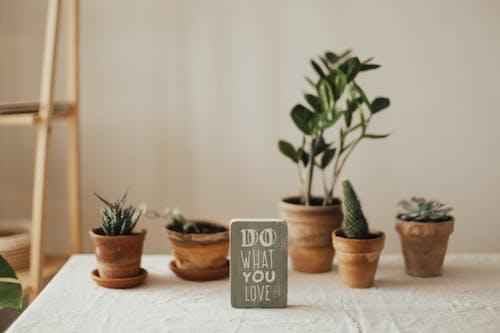 Foto d'estoc gratuïta de cassoles, motivació, plantes, plantes d'interior