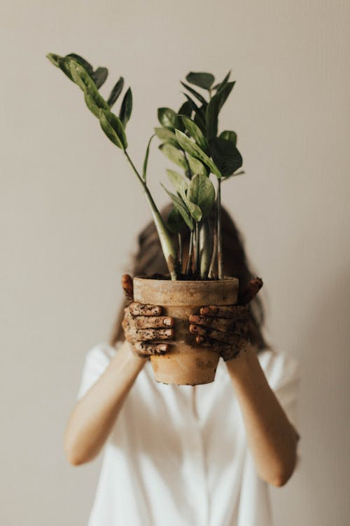 Person Holding Pot Plant