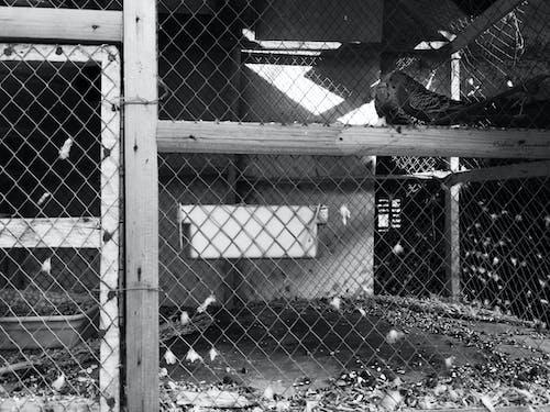 Free stock photo of birds, birds in cage, dark