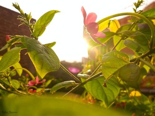 Free stock photo of beautiful flowers, beautiful sunset
