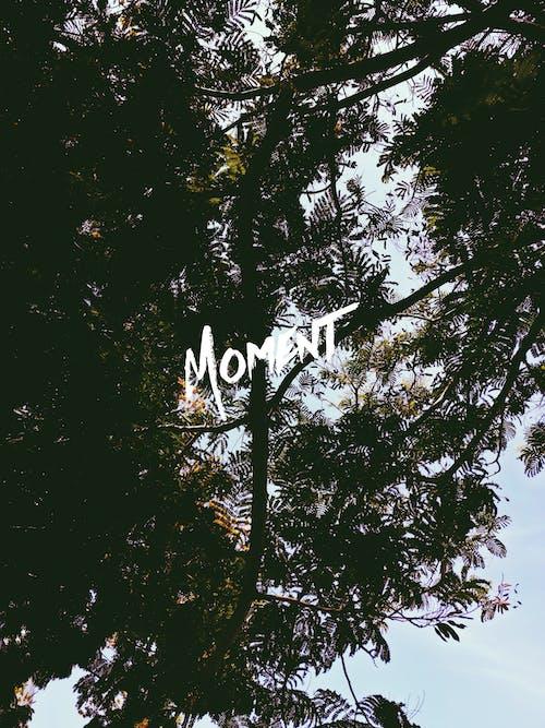 Photos gratuites de forêt d'arbres, magnifique, moment, naturel