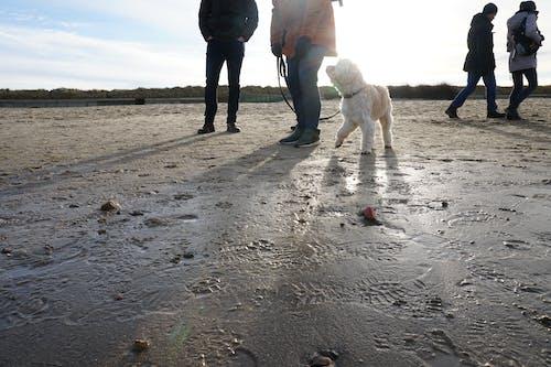 Free stock photo of #dog, natureworld, pets, sunlight