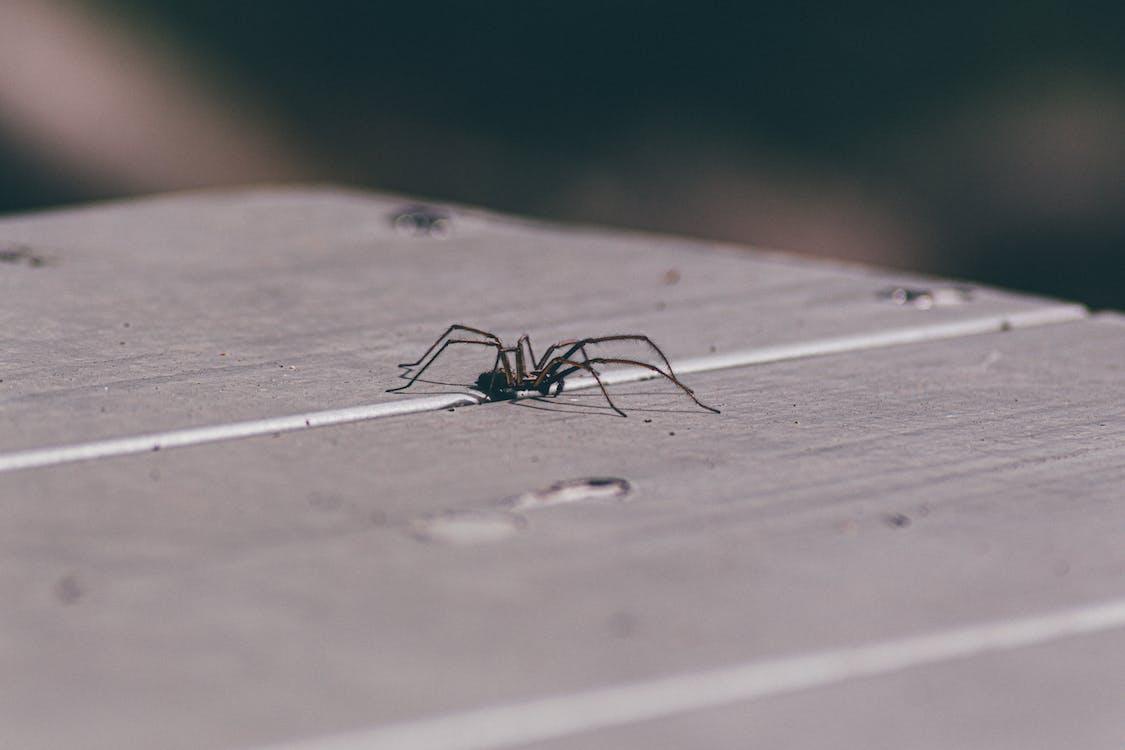 chụp ảnh động vật, con nhện, con vật