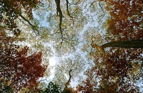 Foto stok gratis alam, bidikan sudut sempit, cabang, Daun-daun