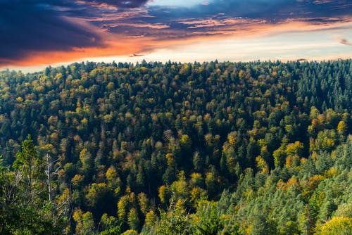 Aerial Photo of Forest During Golden Hour