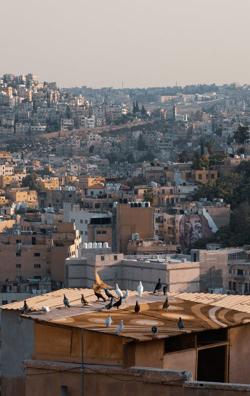 Free stock photo of aerial photography, amman, bird, city