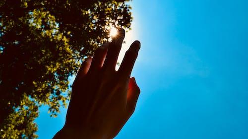 Foto d'estoc gratuïta de #fingers #hand #skin #sunlight