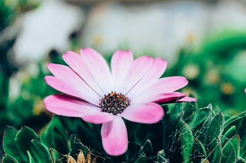 Základová fotografie zdarma na téma aroma, botanický, čerstvý, detail