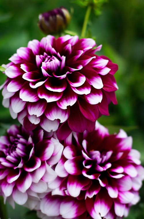 คลังภาพถ่ายฟรี ของ ดอกไม้สวย, ฤดูร้อน, ศิลปะดอกไม้