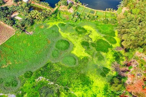 Immagine gratuita di alberi, ambiente, campagna, campo