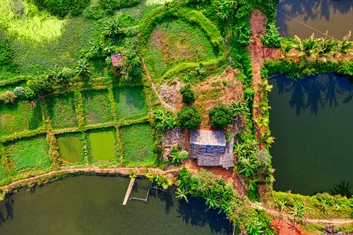 Foto d'estoc gratuïta de a l'aire lliure, agricultura, arbres, camp