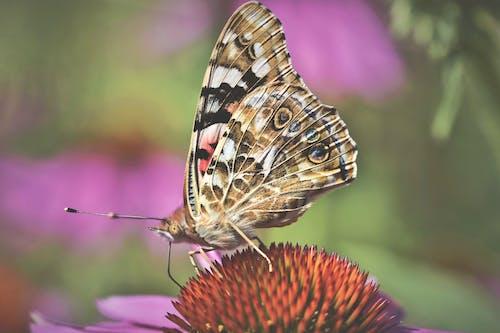 คลังภาพถ่ายฟรี ของ ผีเสื้อ, แมลง