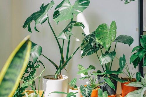 Безкоштовне стокове фото на тему «бамбук, ботанічний, вродлива»