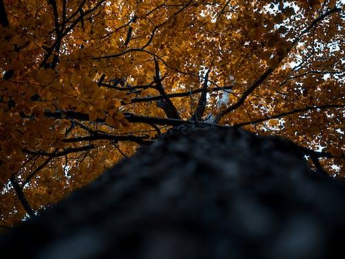 Δωρεάν στοκ φωτογραφιών με δέντρο, κλαδιά, λήψη από χαμηλή γωνία, πτώση