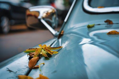 Ingyenes stockfotó autó, homály, jármű, levelek témában