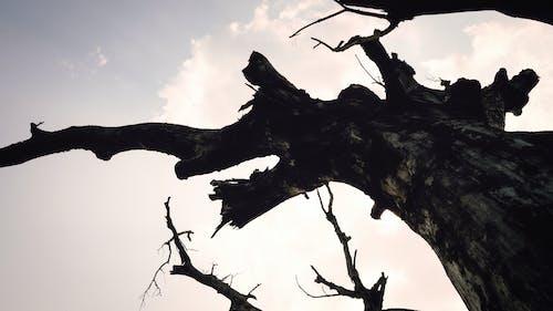 tr, tre树干, 专注于前景, 低角度视图 的 免费素材照片