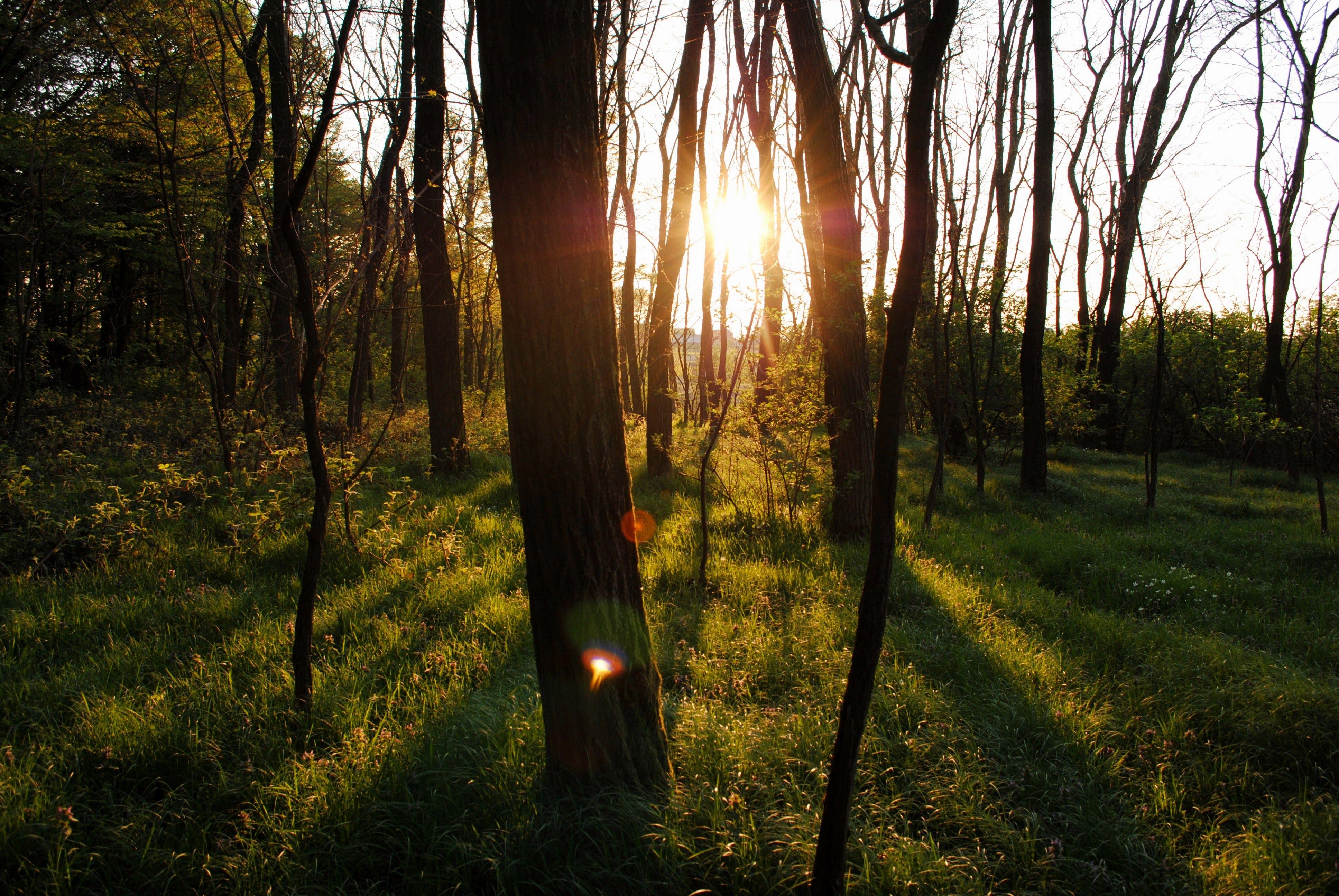 Fotos de stock gratuitas de arboles, bosque, brillante, césped