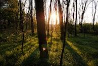 light, landscape, nature